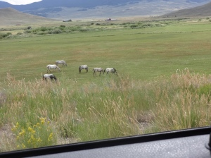 But outside town the desert and the mountain hillsides have given way to pastures in this high valley.